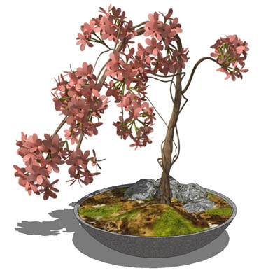 Small, low-poly shrub in a variety of pots. The pl....