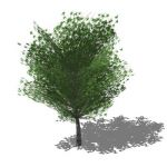 Generic tree in opaque and semi transparent config...
