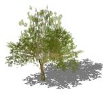 View Larger Image of Generic tree 10