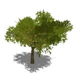 Generic tree in opaque and semi-transparent config...