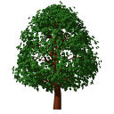 Archicad 11 Object Library part, Garden, Tree Deci....