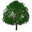 Archicad 11 Object Library part, Garden, Tree Deci...