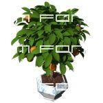 Small orange tree in pot. High angle. Transparent ...