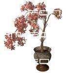 Small cherry tree in pot. Low angle 2. Transparent...